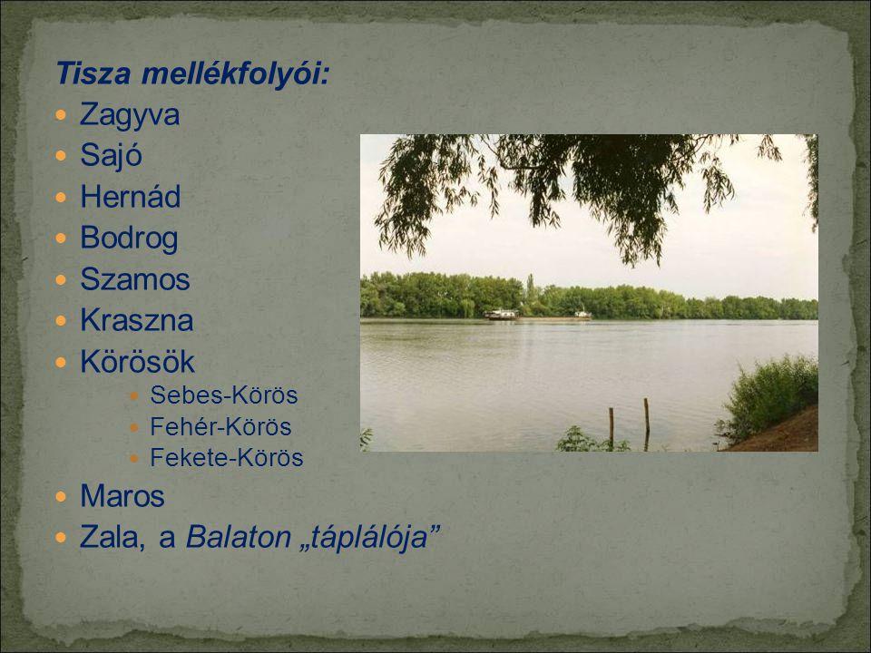 Tisza mellékfolyói:  Zagyva  Sajó  Hernád  Bodrog  Szamos  Kraszna  Körösök  Sebes-Körös  Fehér-Körös  Fekete-Körös  Maros  Zala, a Balato