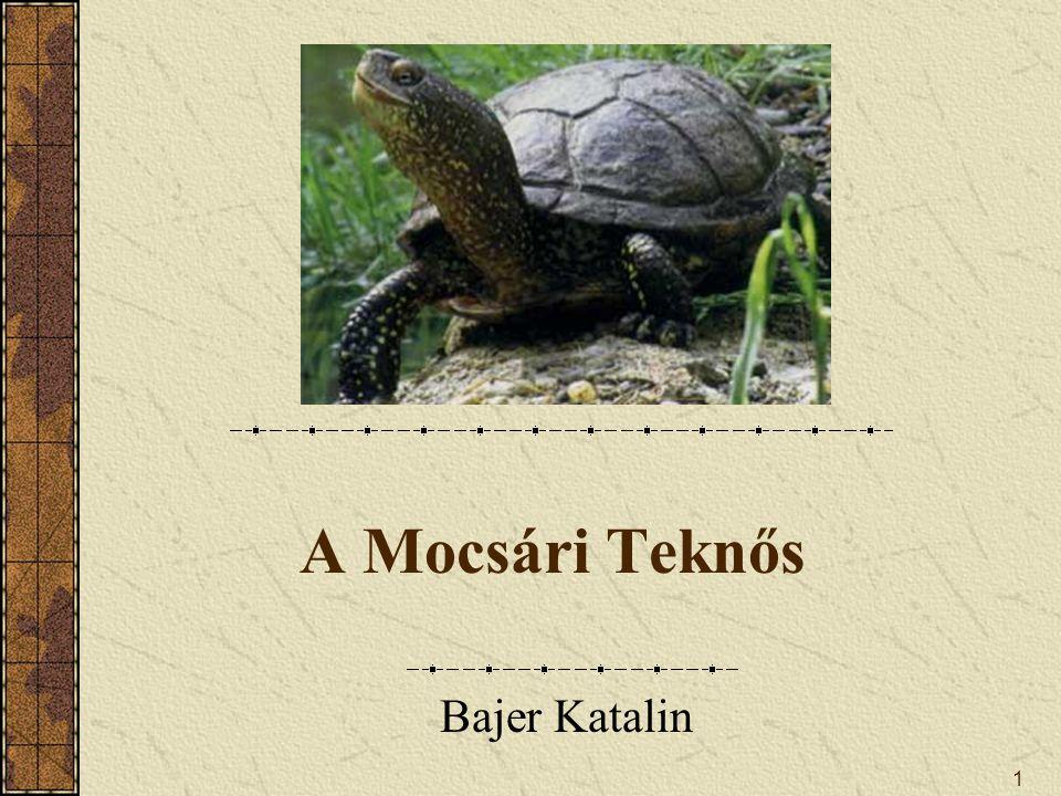 1 A Mocsári Teknős Bajer Katalin