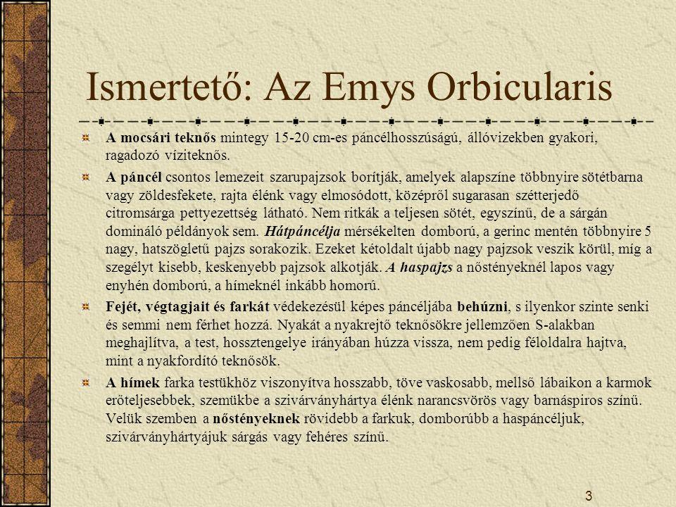 2 Vázlat Az Emys Orbicularis ismertetése Elterjedés Életmód Természetvédelmi helyzet