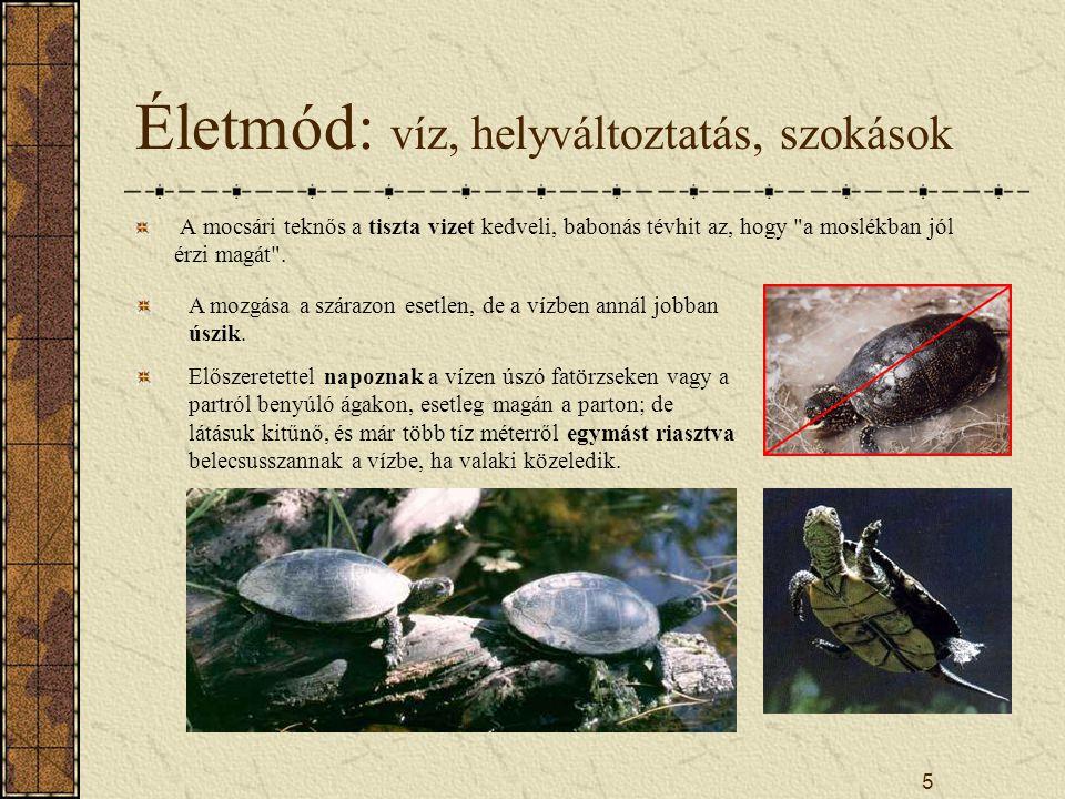 5 Életmód: víz, helyváltoztatás, szokások A mocsári teknős a tiszta vizet kedveli, babonás tévhit az, hogy a moslékban jól érzi magát .