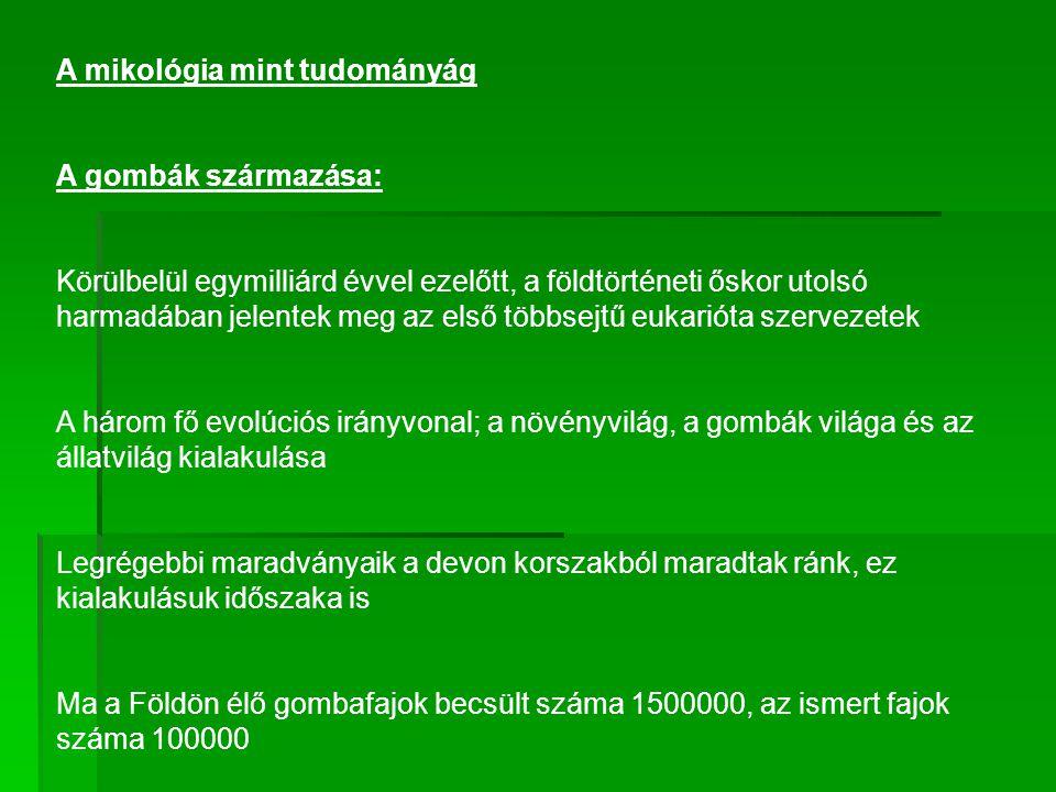 A gombák rendszertana ( taxonómia ) és nevezéktana (nomenklatura): ORSZÁGTÖRZSOSZTÁLY PROTOZOASejtes nyálkagombákAcrasiomycetes (Acrasiomycota) DictyosteliomycotaDictyosteliomycetes Valódi nyálkagombák Myxomycetes (Myxomycota) Protosteliomycetes Élősködő nyálkagombák Plasmodiophoromycetes (Plasmodiophoromycota) CHROMISTAHyphochytriomycota Labirintus gombák Hyphochytriomycetes (Labyrinthulomycota) Labyrinthulomycetes Petespórás gombák Oomycetes (Oomycota) Chytridiomycetes