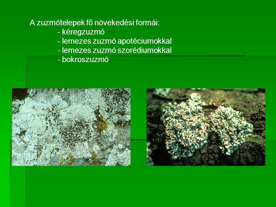 A zuzmótelepek fő növekedési formái: - kéregzuzmó - lemezes zuzmó apotéciumokkal - lemezes zuzmó szorédiumokkal - bokroszuzmó