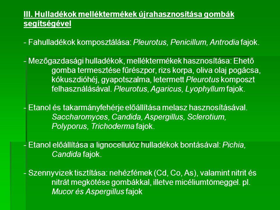 III. Hulladékok melléktermékek újrahasznosítása gombák segítségével - Fahulladékok komposztálása: Pleurotus, Penicillum, Antrodia fajok. - Mezőgazdasá
