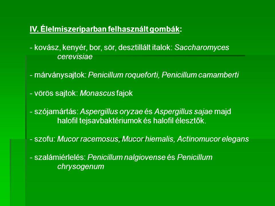 IV. Élelmiszeriparban felhasznált gombák: - kovász, kenyér, bor, sör, desztillált italok: Saccharomyces cerevisiae - márványsajtok: Penicillum roquefo