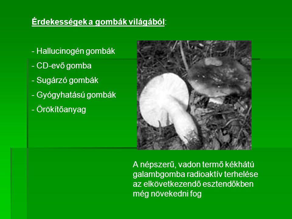 Érdekességek a gombák világából: - Hallucinogén gombák - CD-evő gomba - Sugárzó gombák - Gyógyhatású gombák - Örökítőanyag A népszerű, vadon termő kék