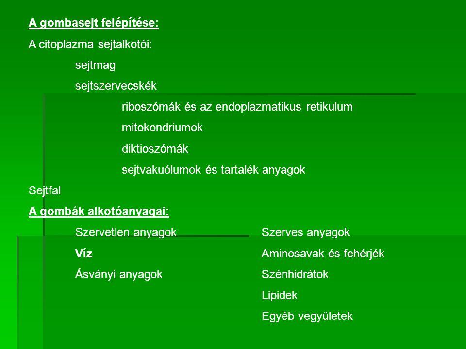 A gombák Ökológiája A gombák életmód típusai: Szaprotróf gombák A gombák a hasznosított szubsztrátum alapján lehetnek: - Szaprofita cukorhasznosítók: Csak egyszerű szerves molekulákat pl.