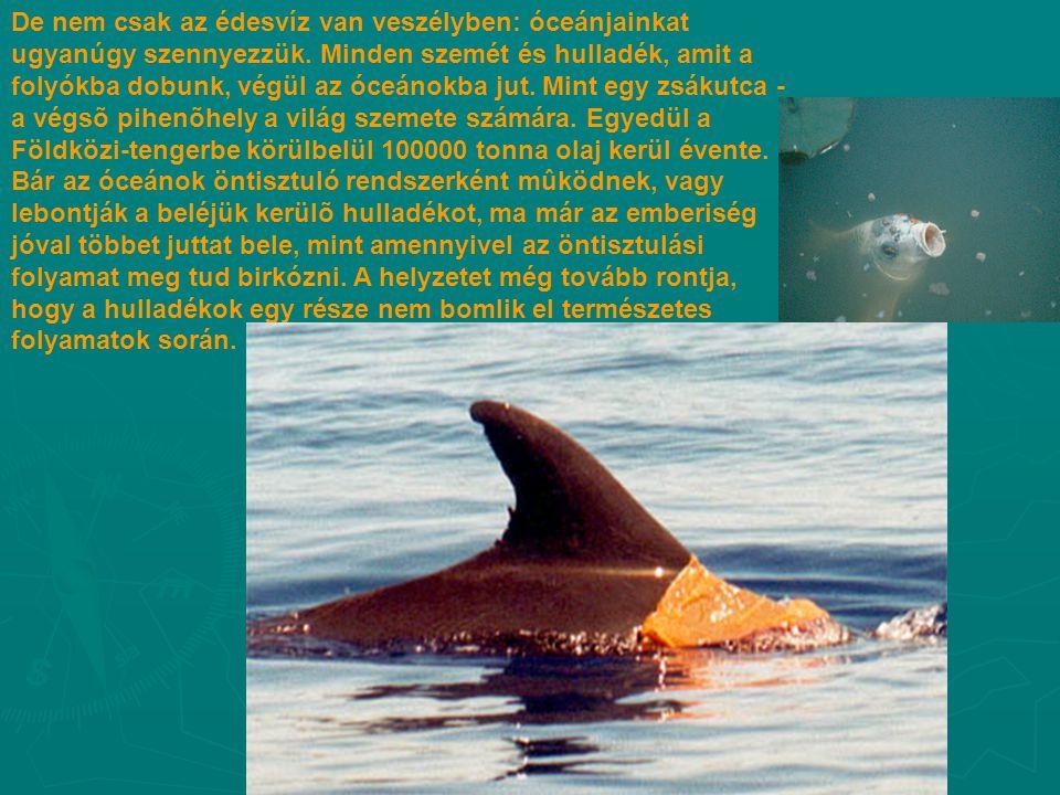 De nem csak az édesvíz van veszélyben: óceánjainkat ugyanúgy szennyezzük. Minden szemét és hulladék, amit a folyókba dobunk, végül az óceánokba jut. M