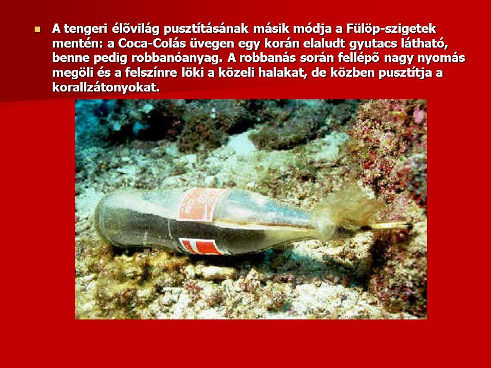  A tengeri élõvilág pusztításának másik módja a Fülöp-szigetek mentén: a Coca-Colás üvegen egy korán elaludt gyutacs látható, benne pedig robbanóanya