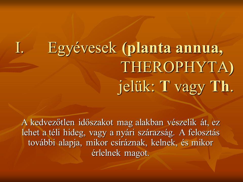 I.Egyévesek (planta annua, THEROPHYTA) jelük: T vagy Th. A kedvezőtlen időszakot mag alakban vészelik át, ez lehet a téli hideg, vagy a nyári szárazsá