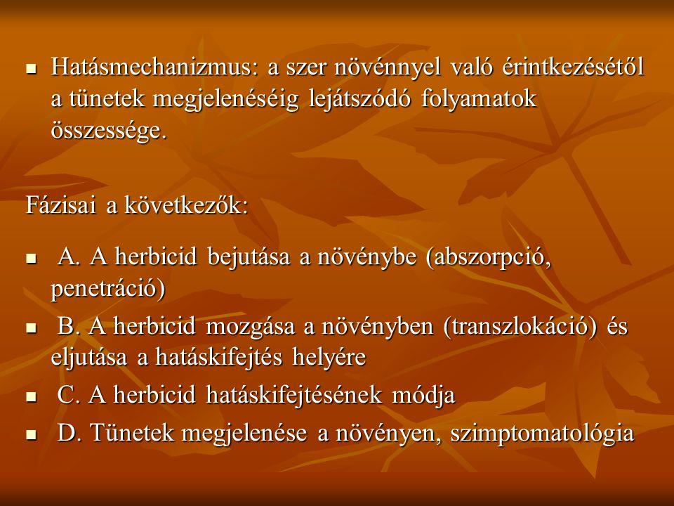  Hatásmechanizmus: a szer növénnyel való érintkezésétől a tünetek megjelenéséig lejátszódó folyamatok összessége. Fázisai a következők:  A. A herbic