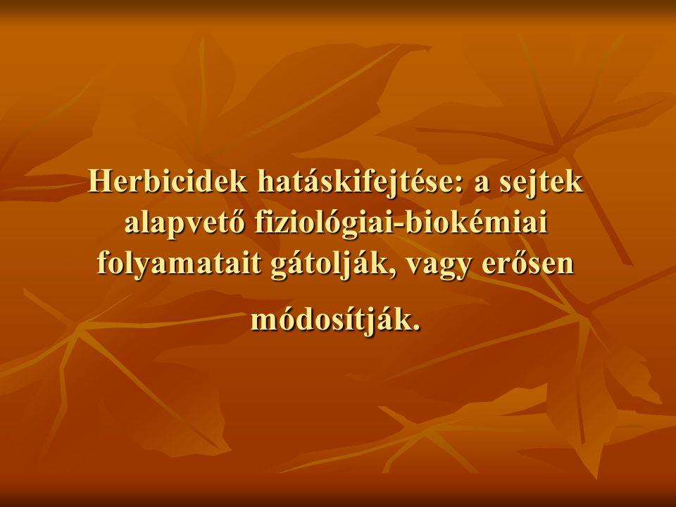 Herbicidek hatáskifejtése: a sejtek alapvető fiziológiai-biokémiai folyamatait gátolják, vagy erősen módosítják.