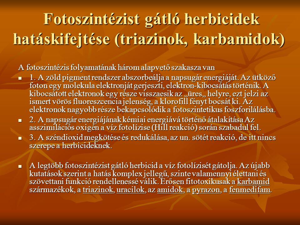 Fotoszintézist gátló herbicidek hatáskifejtése (triazinok, karbamidok) Fotoszintézist gátló herbicidek hatáskifejtése (triazinok, karbamidok) A fotosz
