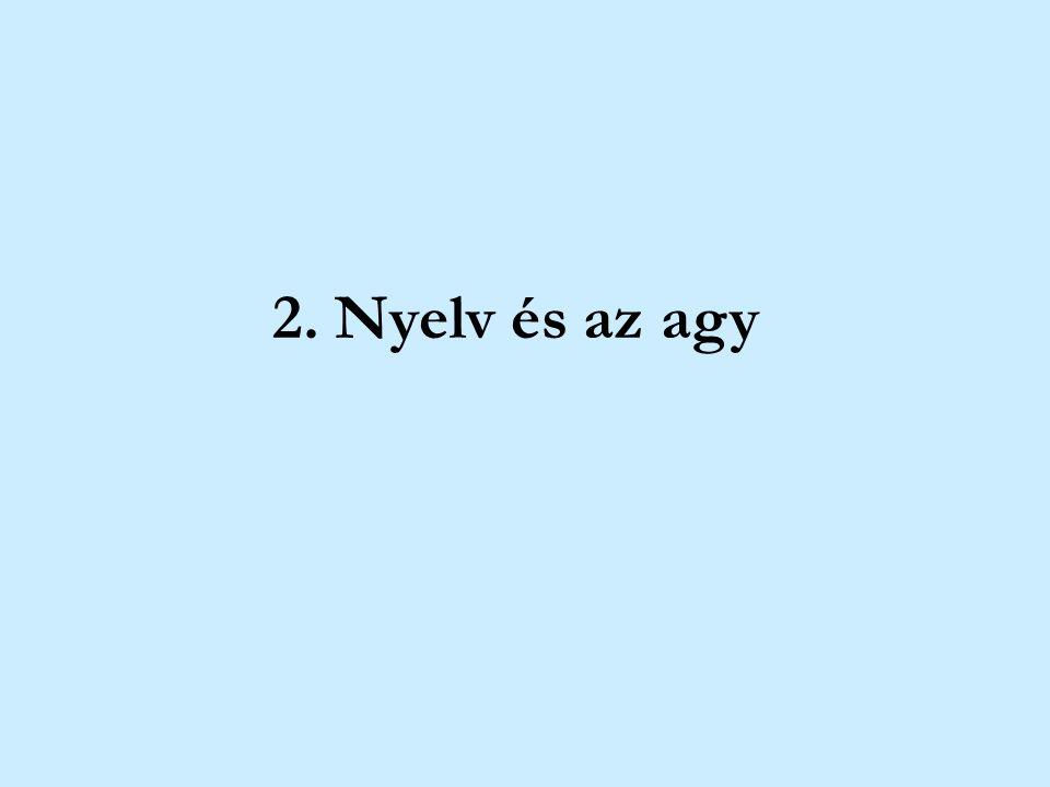 2. Nyelv és az agy