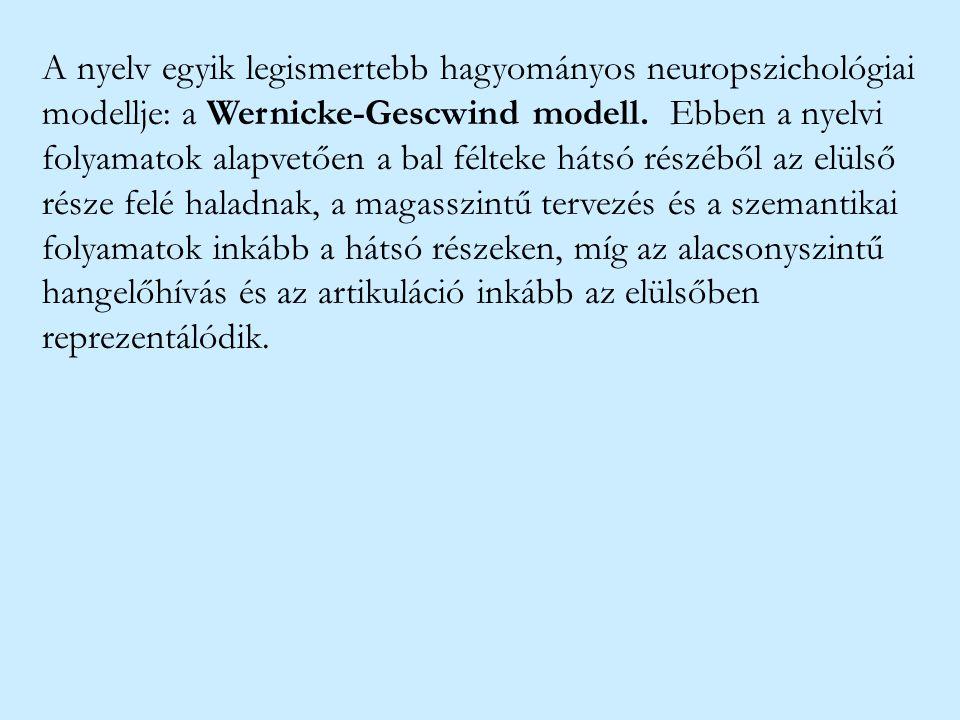 A nyelv egyik legismertebb hagyományos neuropszichológiai modellje: a Wernicke-Gescwind modell. Ebben a nyelvi folyamatok alapvetően a bal félteke hát