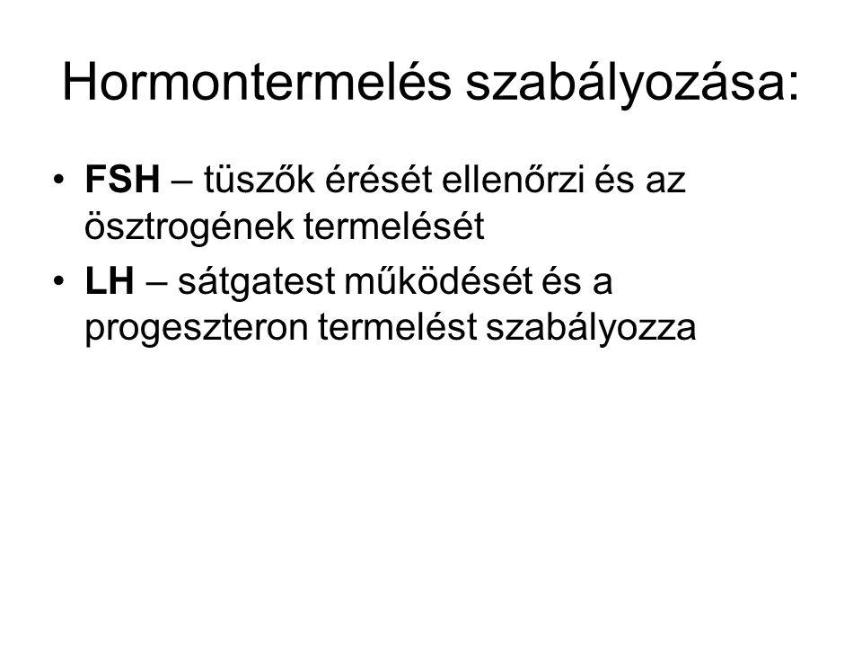 Hormontermelés szabályozása: •FSH – tüszők érését ellenőrzi és az ösztrogének termelését •LH – sátgatest működését és a progeszteron termelést szabály