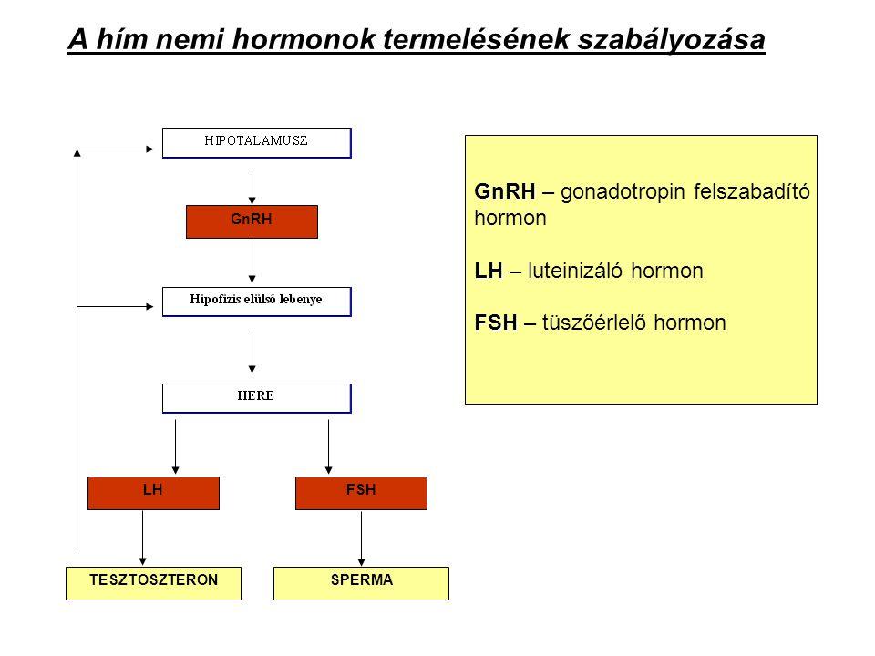 GnRH LHFSH TESZTOSZTERONSPERMA A hím nemi hormonok termelésének szabályozása GnRH GnRH – gonadotropin felszabadító hormon LH LH – luteinizáló hormon F