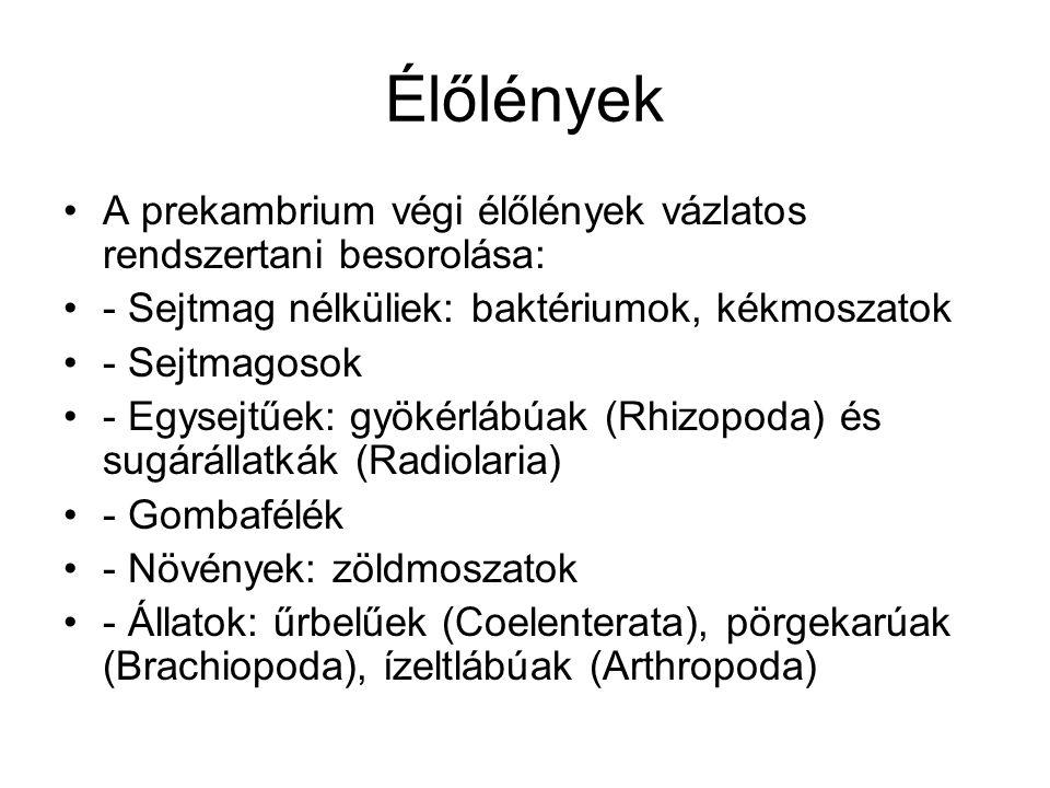 Élőlények •A prekambrium végi élőlények vázlatos rendszertani besorolása: •- Sejtmag nélküliek: baktériumok, kékmoszatok •- Sejtmagosok •- Egysejtűek: gyökérlábúak (Rhizopoda) és sugárállatkák (Radiolaria) •- Gombafélék •- Növények: zöldmoszatok •- Állatok: űrbelűek (Coelenterata), pörgekarúak (Brachiopoda), ízeltlábúak (Arthropoda)