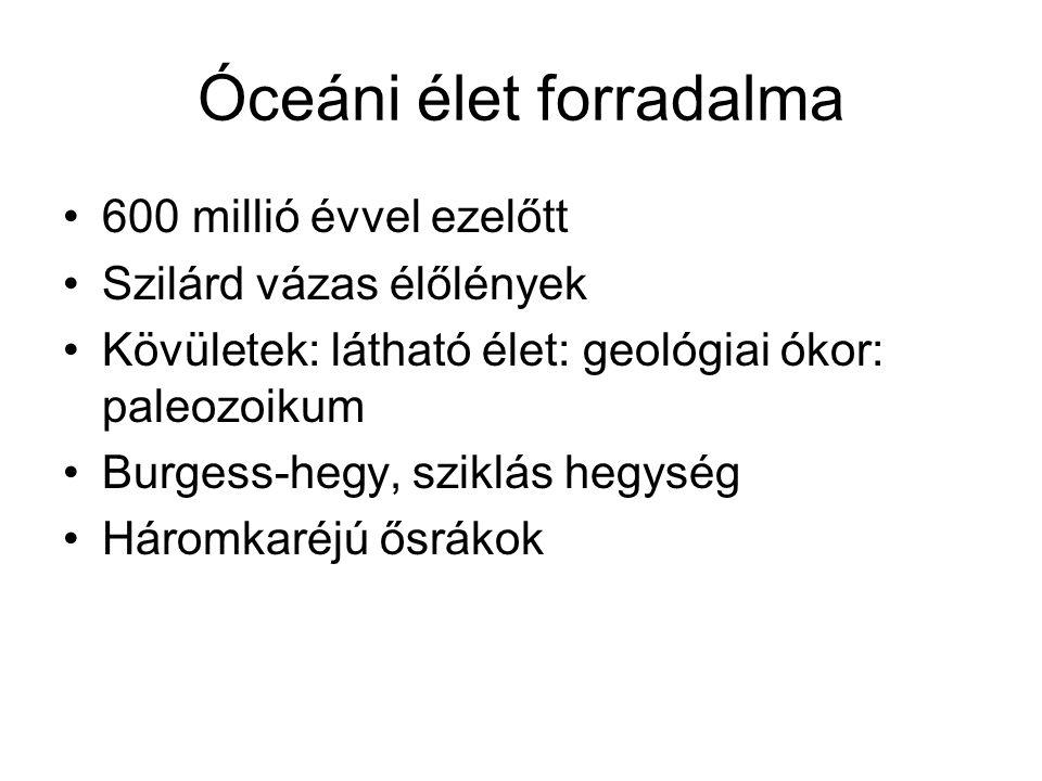 Óceáni élet forradalma •600 millió évvel ezelőtt •Szilárd vázas élőlények •Kövületek: látható élet: geológiai ókor: paleozoikum •Burgess-hegy, sziklás