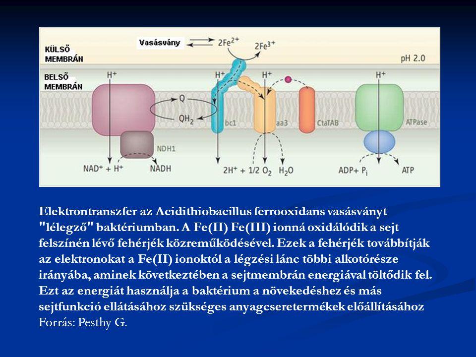Elektrontranszfer az Acidithiobacillus ferrooxidans vasásványt