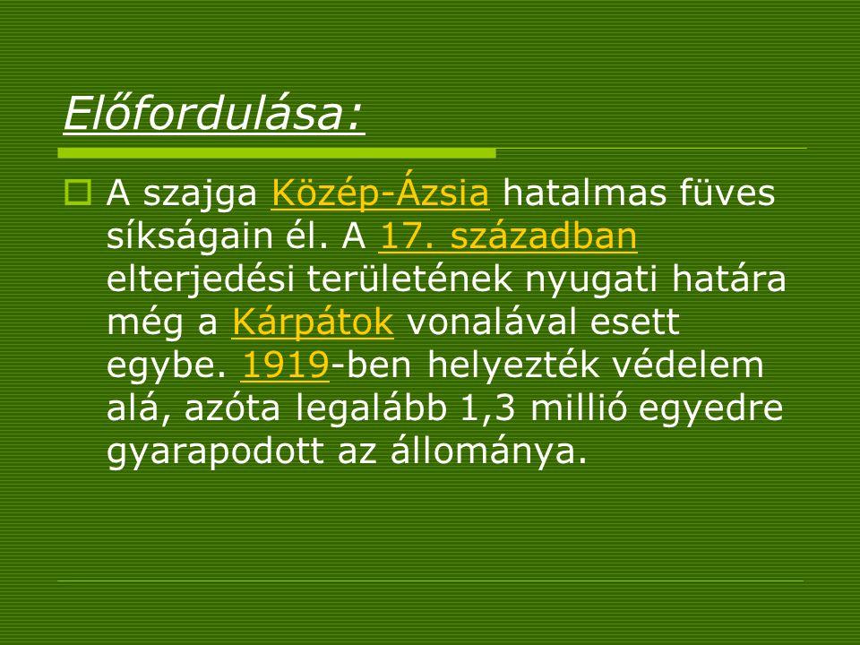 Előfordulása:  A szajga Közép-Ázsia hatalmas füves síkságain él. A 17. században elterjedési területének nyugati határa még a Kárpátok vonalával eset