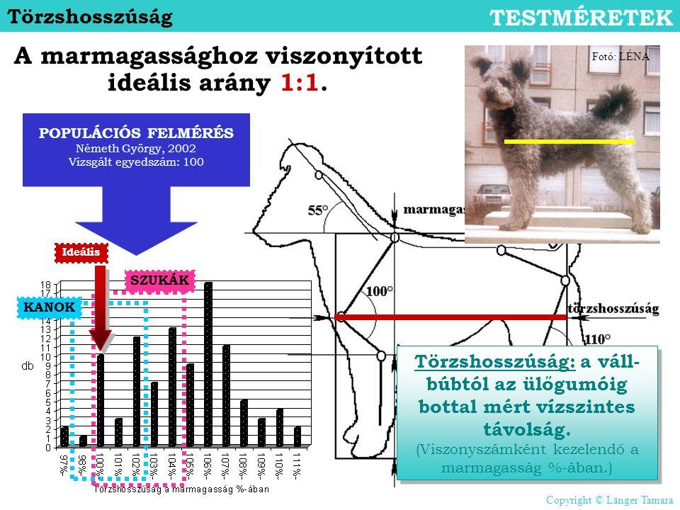 Törzshosszúság TESTMÉRETEK Törzshosszúság: a váll- búbtól az ülőgumóig bottal mért vízszintes távolság. (Viszonyszámként kezelendő a marmagasság %-ába