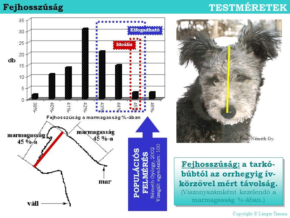 Fejhosszúság TESTMÉRETEK Fejhosszúság: a tarkó- búbtól az orrhegyig ív- körzővel mért távolság. (Viszonyszámként kezelendő a marmagasság %-ában.) POPU