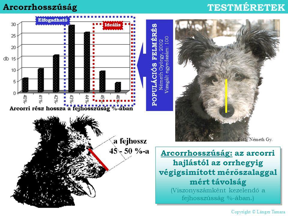 Arcorrhosszúság TESTMÉRETEK Arcorrhosszúság: az arcorri hajlástól az orrhegyig végigsimított mérőszalaggal mért távolság (Viszonyszámként kezelendő a