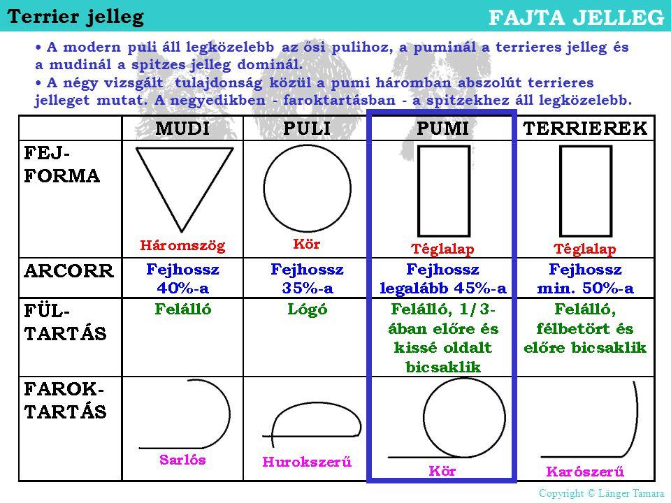 Terrier jelleg FAJTA JELLEG • A modern puli áll legközelebb az ősi pulihoz, a puminál a terrieres jelleg és a mudinál a spitzes jelleg dominál. • A né
