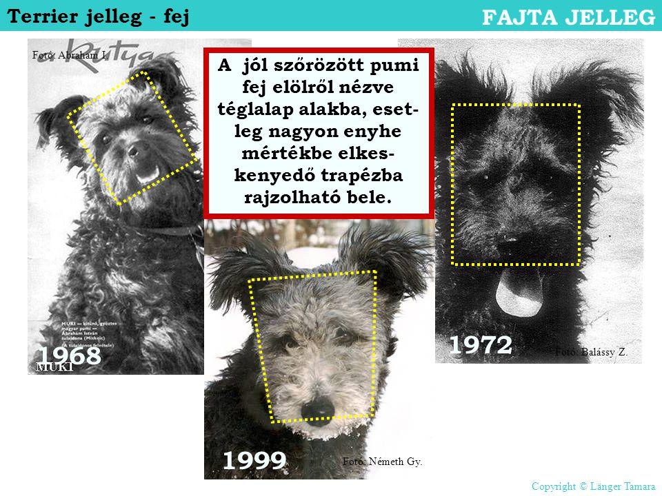 1968 1972 1999 Terrier jelleg - fej FAJTA JELLEG A jól szőrözött pumi fej elölről nézve téglalap alakba, eset- leg nagyon enyhe mértékbe elkes- kenyed