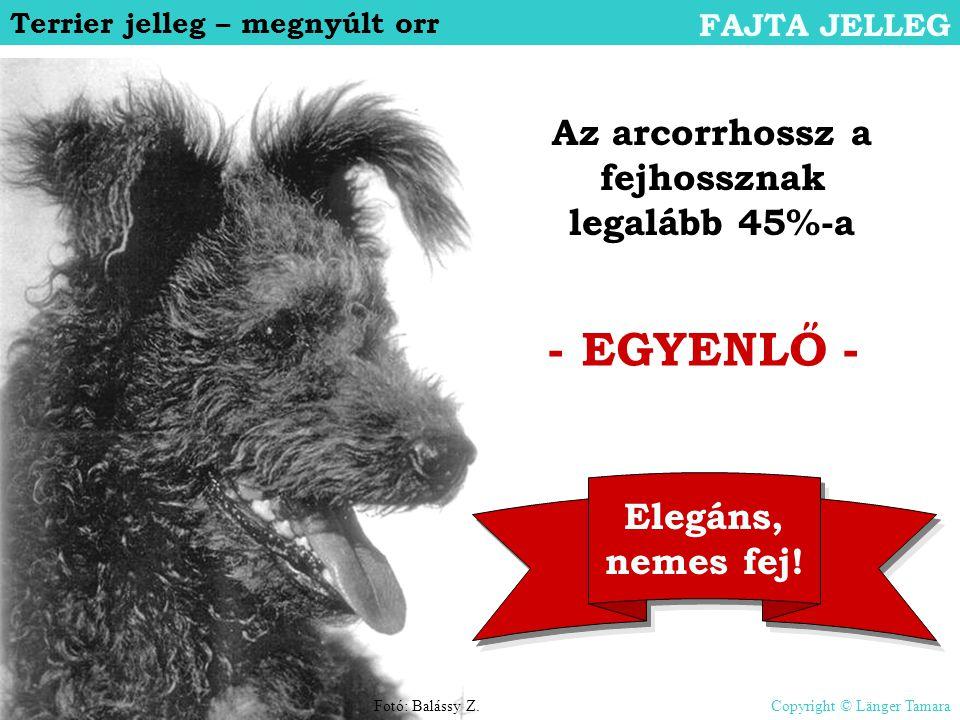 Terrier jelleg – megnyúlt orr FAJTA JELLEG - EGYENLŐ - Az arcorrhossz a fejhossznak legalább 45%-a Elegáns, nemes fej! Fotó: Balássy Z.Copyright © Län