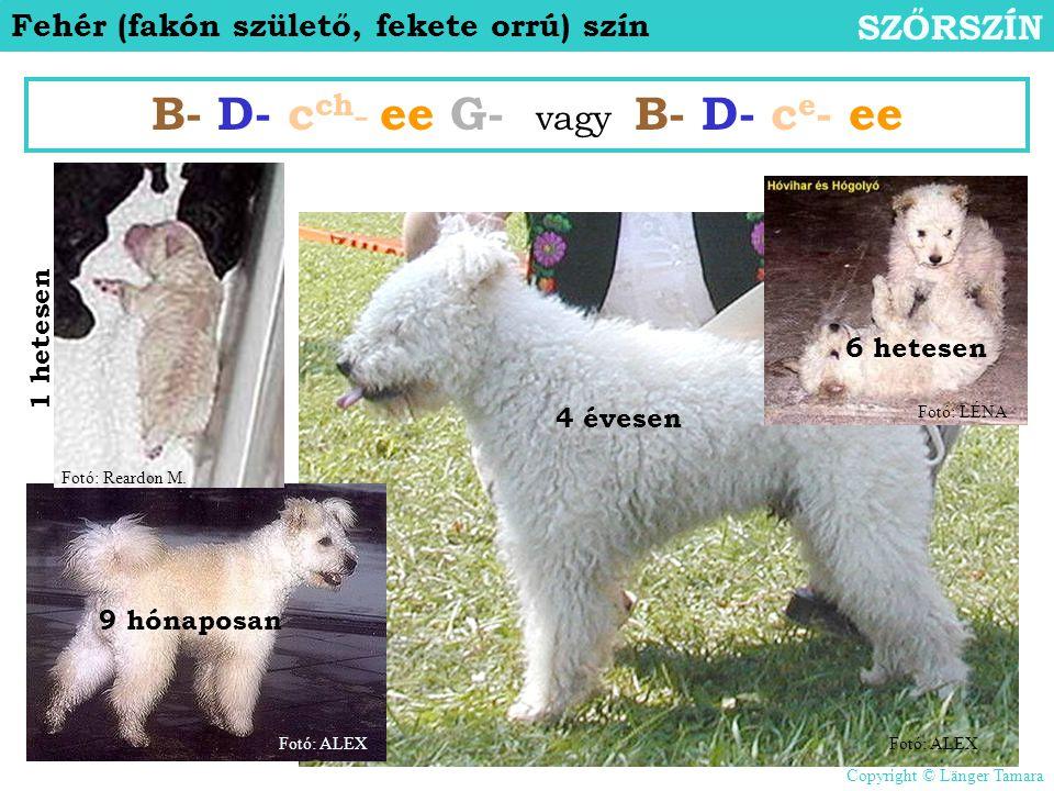 Fehér (fakón születő, fekete orrú) szín SZŐRSZÍN B- D- c ch - ee G- vagy B- D- c e - ee 1 hetesen 6 hetesen 9 hónaposan 4 évesen Fotó: ALEX Fotó: LÉNA