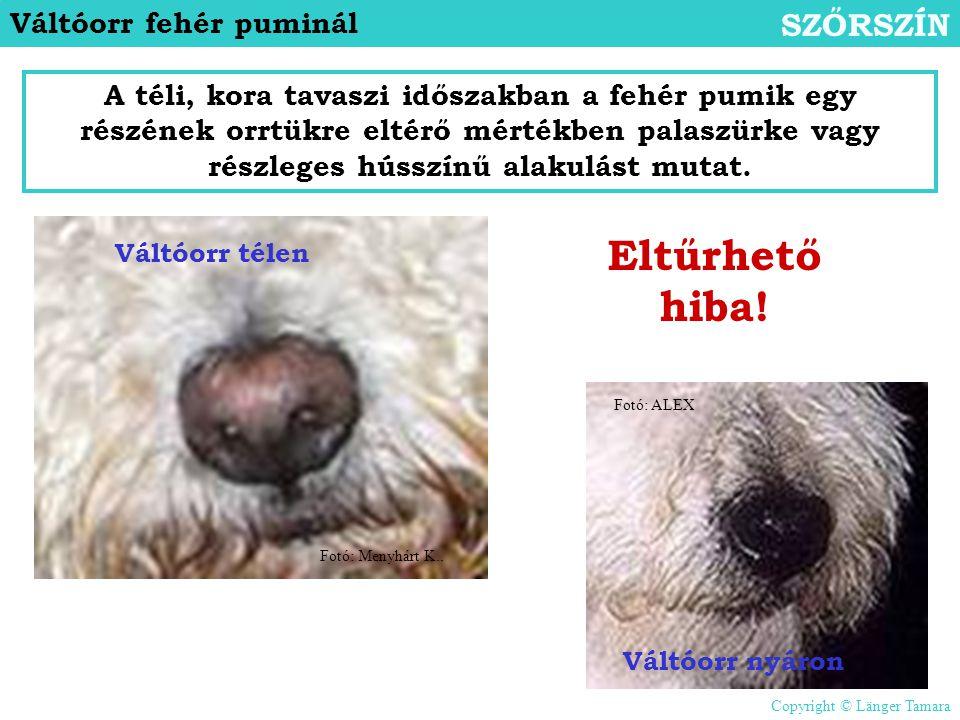 Váltóorr fehér puminál SZŐRSZÍN A téli, kora tavaszi időszakban a fehér pumik egy részének orrtükre eltérő mértékben palaszürke vagy részleges hússzín