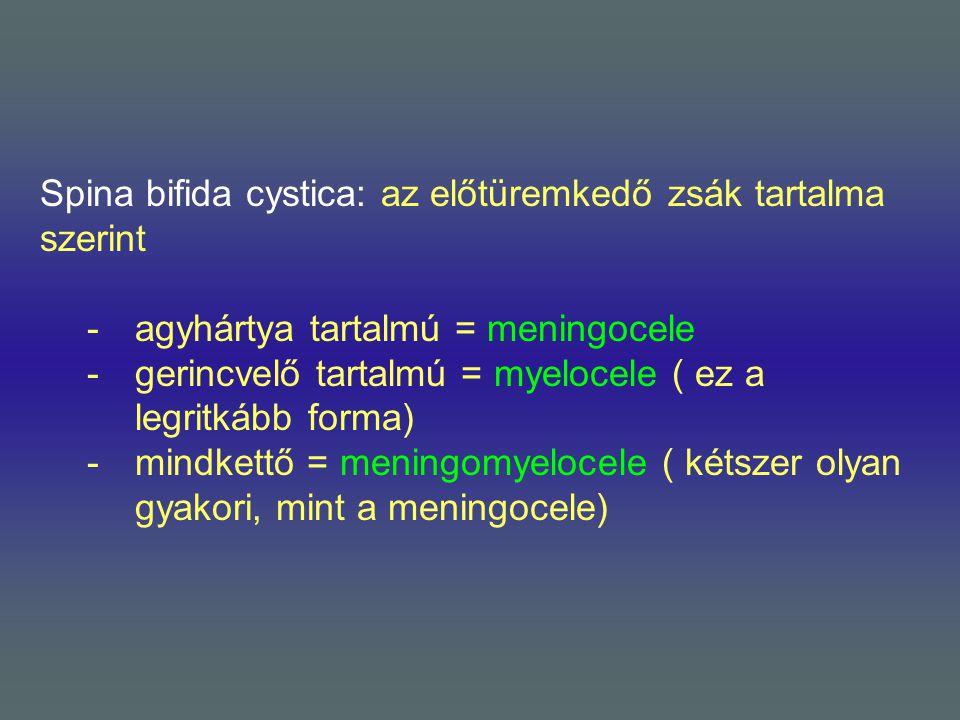 Spina bifida cystica: az előtüremkedő zsák tartalma szerint -agyhártya tartalmú = meningocele -gerincvelő tartalmú = myelocele ( ez a legritkább forma