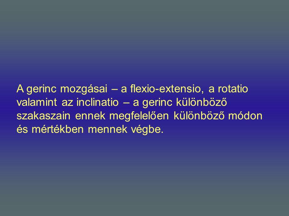 A gerinc mozgásai – a flexio-extensio, a rotatio valamint az inclinatio – a gerinc különböző szakaszain ennek megfelelően különböző módon és mértékben