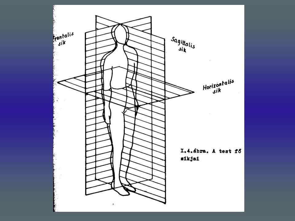 A gerinc frontalis síkban létrejövő elhajlását nevezzük scoliosisnak.