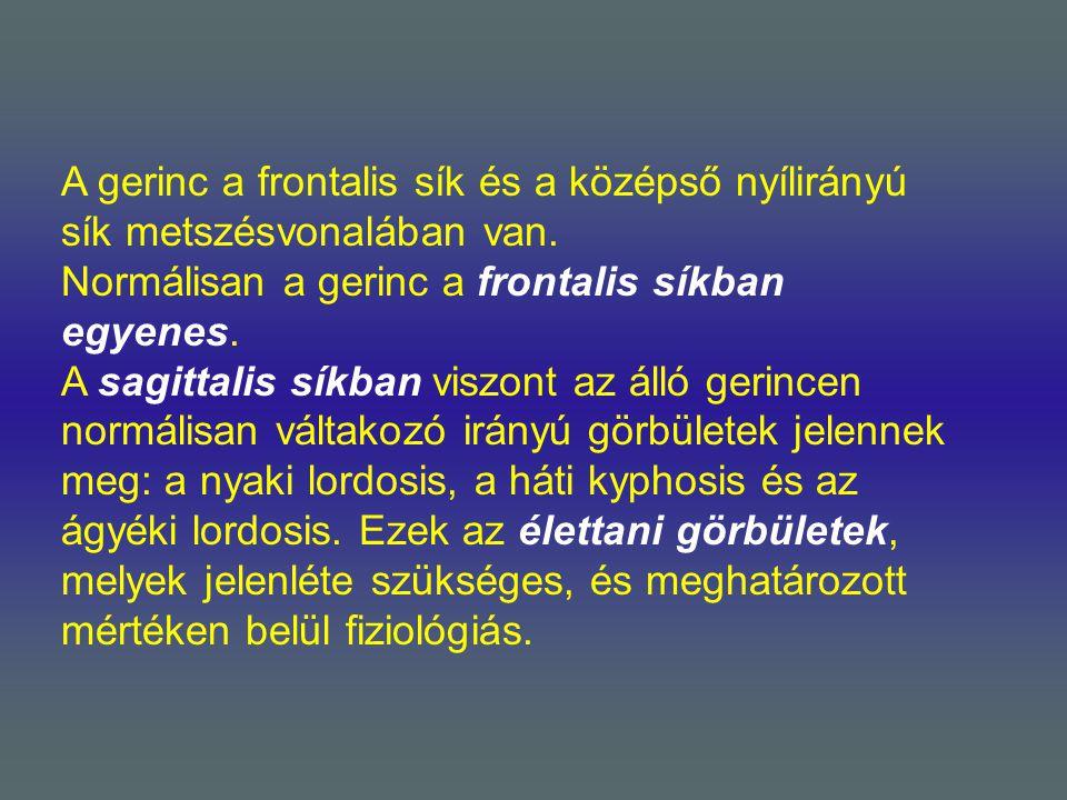 A gerinc a frontalis sík és a középső nyílirányú sík metszésvonalában van. Normálisan a gerinc a frontalis síkban egyenes. A sagittalis síkban viszont