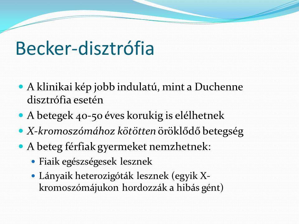 Becker-disztrófia  A klinikai kép jobb indulatú, mint a Duchenne disztrófia esetén  A betegek 40-50 éves korukig is elélhetnek  X-kromoszómához köt
