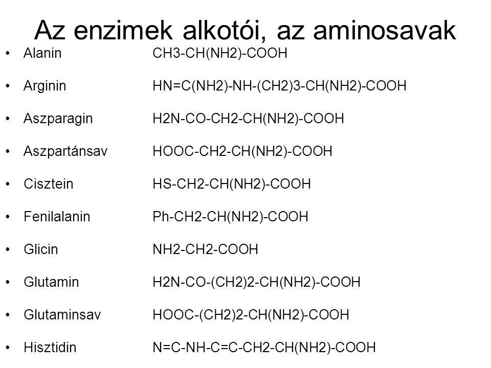 Az enzimek alkotói, az aminosavak •Alanin CH3-CH(NH2)-COOH •Arginin HN=C(NH2)-NH-(CH2)3-CH(NH2)-COOH •Aszparagin H2N-CO-CH2-CH(NH2)-COOH •AszpartánsavHOOC-CH2-CH(NH2)-COOH •CiszteinHS-CH2-CH(NH2)-COOH •Fenilalanin Ph-CH2-CH(NH2)-COOH •Glicin NH2-CH2-COOH •Glutamin H2N-CO-(CH2)2-CH(NH2)-COOH •Glutaminsav HOOC-(CH2)2-CH(NH2)-COOH •Hisztidin N=C-NH-C=C-CH2-CH(NH2)-COOH
