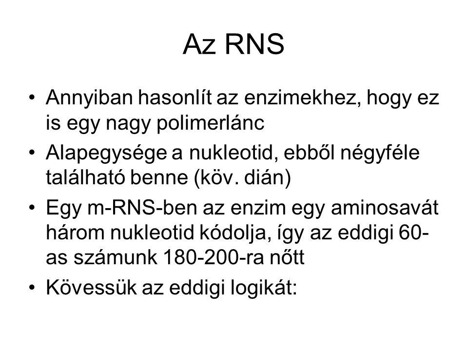 Az RNS •Annyiban hasonlít az enzimekhez, hogy ez is egy nagy polimerlánc •Alapegysége a nukleotid, ebből négyféle található benne (köv.