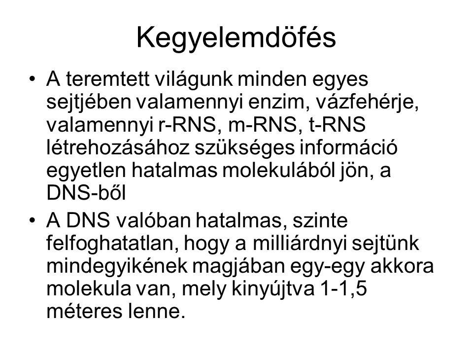 Kegyelemdöfés •A teremtett világunk minden egyes sejtjében valamennyi enzim, vázfehérje, valamennyi r-RNS, m-RNS, t-RNS létrehozásához szükséges információ egyetlen hatalmas molekulából jön, a DNS-ből •A DNS valóban hatalmas, szinte felfoghatatlan, hogy a milliárdnyi sejtünk mindegyikének magjában egy-egy akkora molekula van, mely kinyújtva 1-1,5 méteres lenne.
