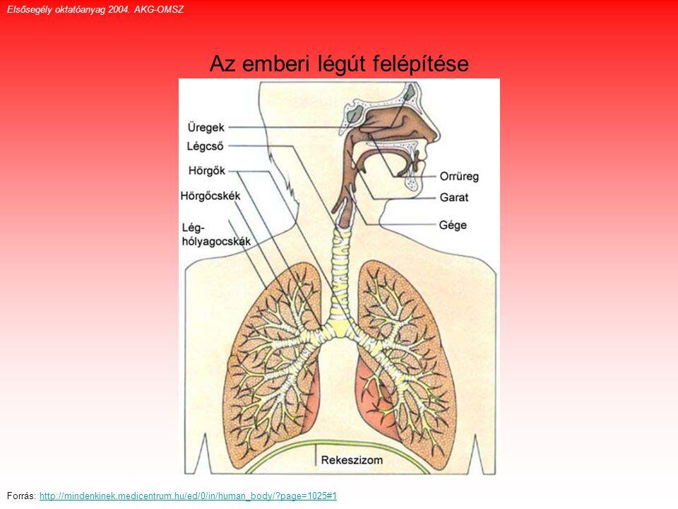 Az emberi légút felépítése Elsősegély oktatóanyag 2004. AKG-OMSZ Forrás: http://mindenkinek.medicentrum.hu/ed/0/in/human_body/?page=1025#1http://minde