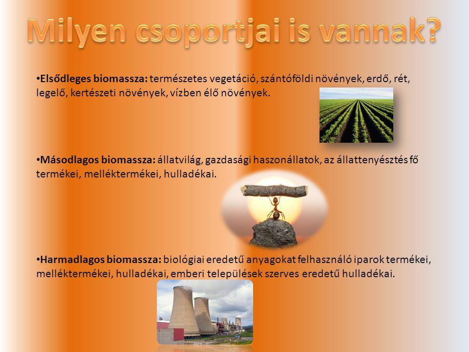 • Elsődleges biomassza: természetes vegetáció, szántóföldi növények, erdő, rét, legelő, kertészeti növények, vízben élő növények.