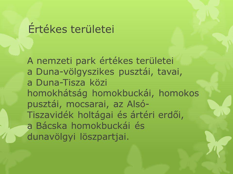 Értékes területei A nemzeti park értékes területei a Duna-völgyszikes pusztái, tavai, a Duna-Tisza közi homokhátság homokbuckái, homokos pusztái, mocsarai, az Alsó- Tiszavidék holtágai és ártéri erdői, a Bácska homokbuckái és dunavölgyi löszpartjai.