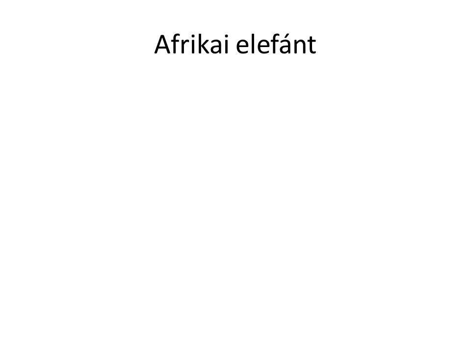 Előfordulása • Az afrikai elefánt korábban a Szaharától délre egész Afrikában elterjedt volt, manapság elterjedése elsősorban a nemzeti parkokra és egyéb védett területekre korlátozódik.
