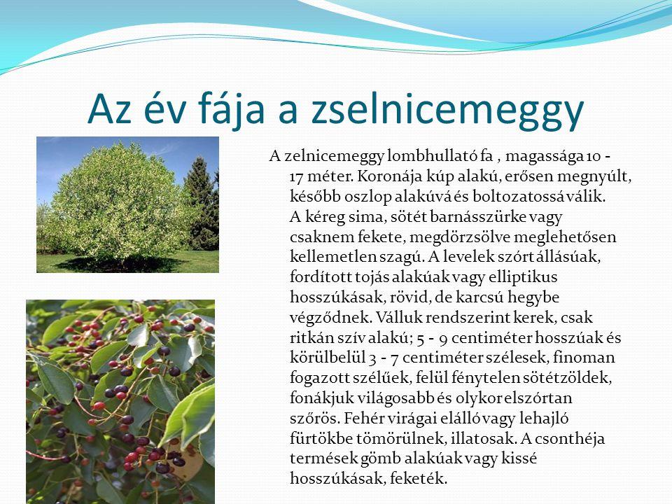 Az év fája a zselnicemeggy A zelnicemeggy lombhullató fa, magassága 10 - 17 méter.