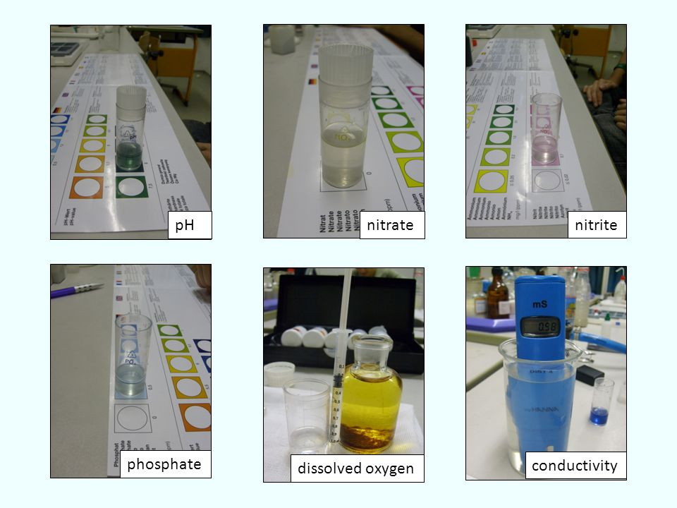 pH phosphate dissolved oxygen conductivity nitrate nitrite