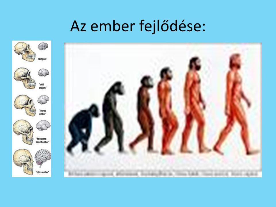 Előemberek • Előembernek nevezzük azokat a típusokat, amiket még nem sorolunk a Homo genusba, de már az emberfélékhez sorolhatók.
