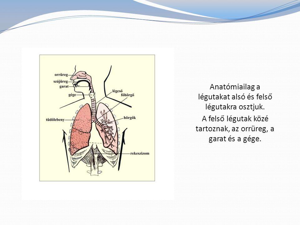 A tüszős mandulagyulladás tünetei: hidegrázás, magas láz, nyelésre erősödő torokfájás, a mandulák vörösek és duzzadtak, gennyes váladék és lepedék a mandulákon, lepedékes nyelv, étvágytalanság, rossz közérzet, fejfájás, hányás.