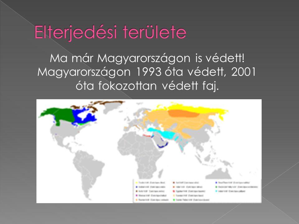 Ma már Magyarországon is védett! Magyarországon 1993 óta védett, 2001 óta fokozottan védett faj.