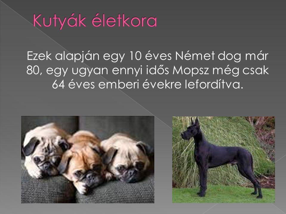 Ezek alapján egy 10 éves Német dog már 80, egy ugyan ennyi idős Mopsz még csak 64 éves emberi évekre lefordítva.